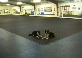 Kennel And Doggy Daycare Rubber Flooring