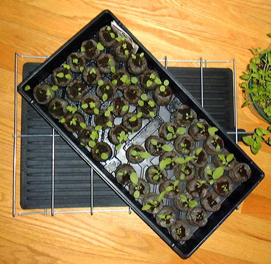 Heated seed mat