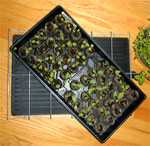 Seed Warming Mat To Help Plants Grow