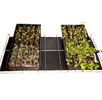 Seedling Heat Mat for warm germination station for indoor growing